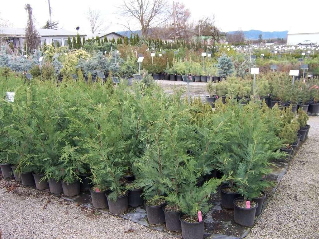 shrubs-plants-7