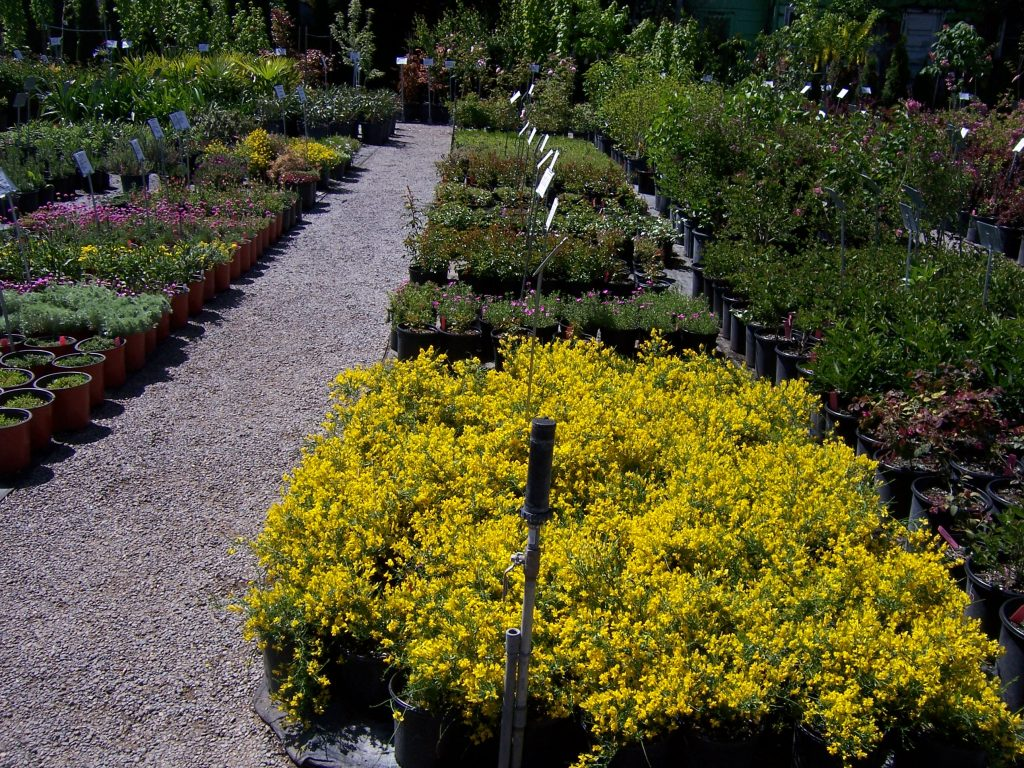 ground-cover-plants-4