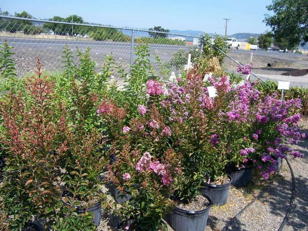 shrubs-plants-12