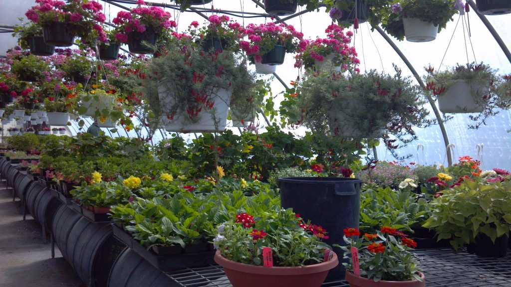 hanging-baskets-flowers