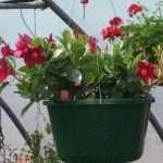 hanging-plants-15