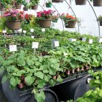 annuals-plants-1