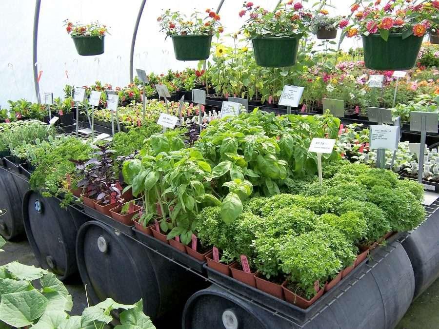 fruits-vegetables-medford-nursery
