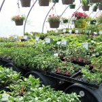 annuals-perennials-medford-or