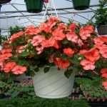 hanging-plants--20