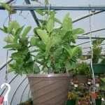 hanging-plants-24