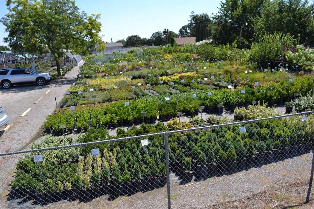 shrubs-palnts