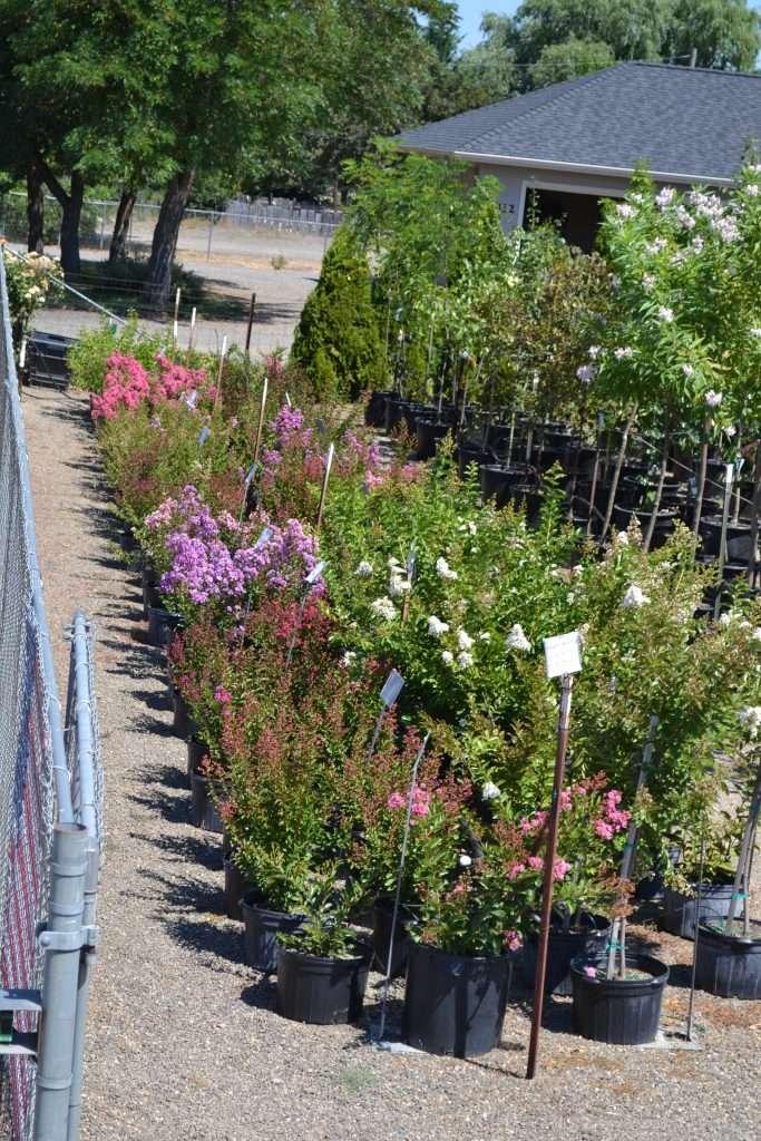 shrubs-plants-8