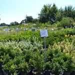 shrubs-plants-3