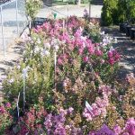 shrubs-plants-9