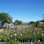 shrubs-plants-4