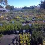 shrubs-plants-5