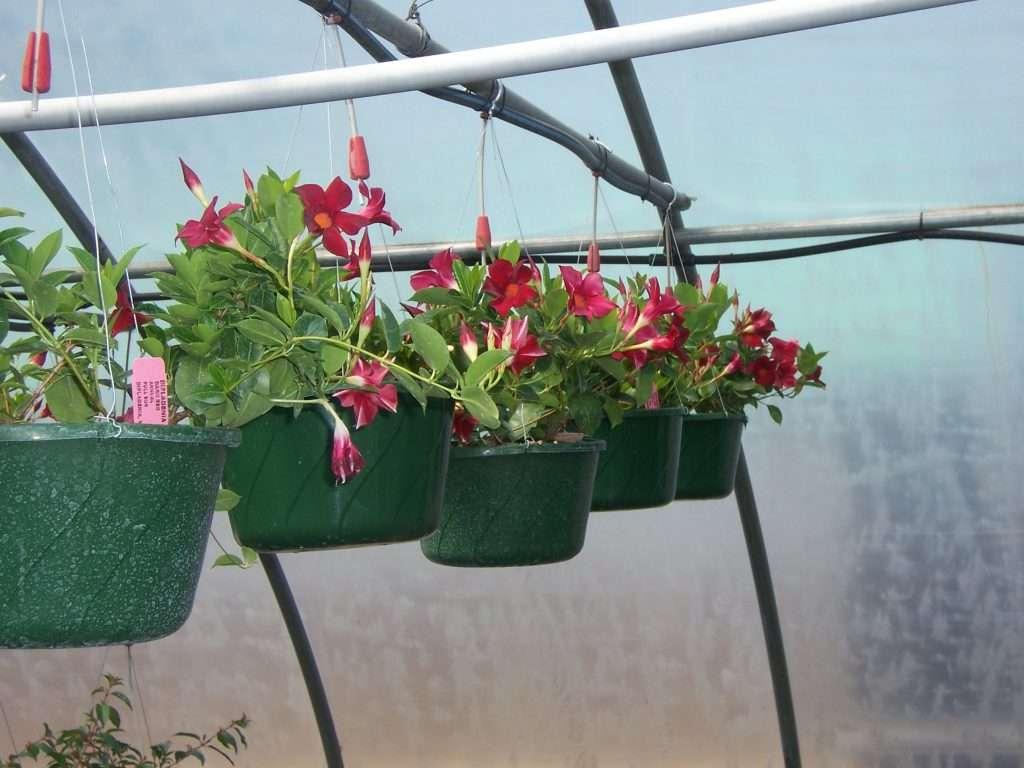 hanging-plants-30