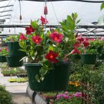 hanging-plants-31