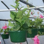 hanging-plants-33
