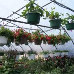 hanging-plants-6