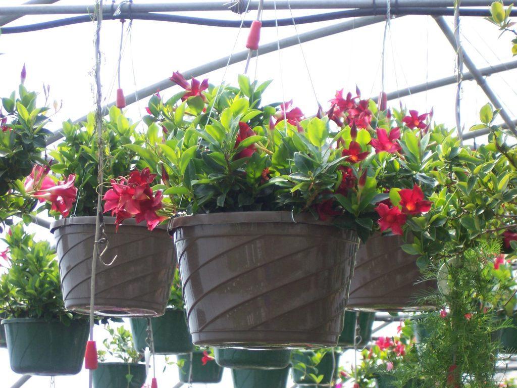 hanging-plants-7