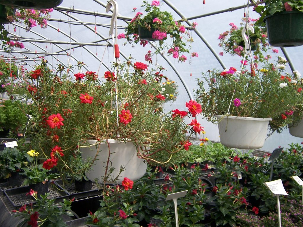 hanging-plants-8