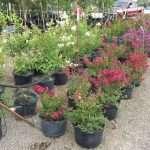 shrubs-plants-16
