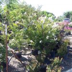 shrubs-plants-15