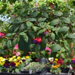 hanging-plants-2